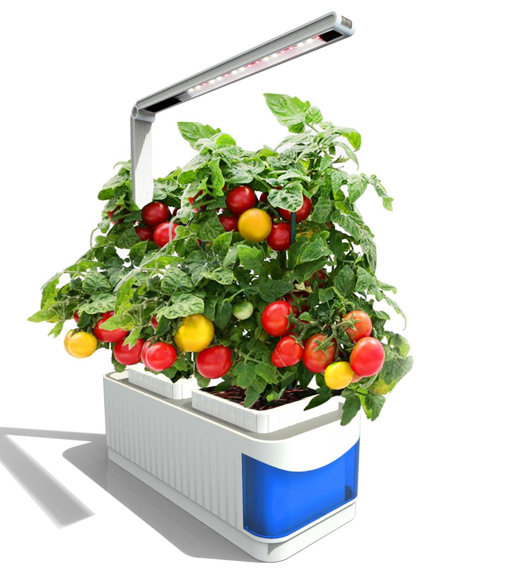 植物水培(LED植物台灯)